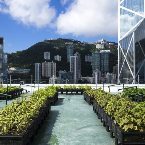 Cities are Turning to Rooftop Farming